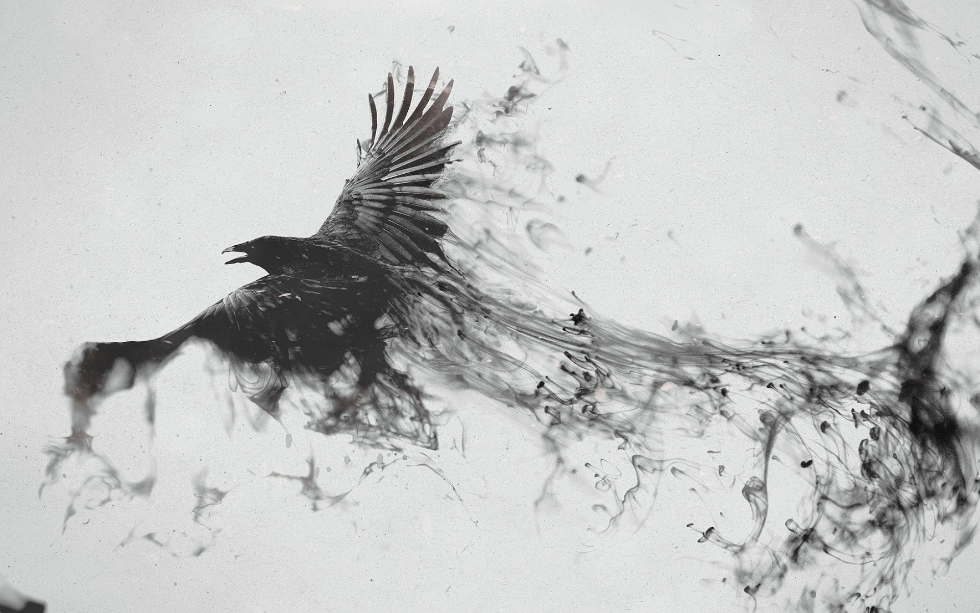Abstract-Smoke-Flying-Bird-Art-Photos-5275